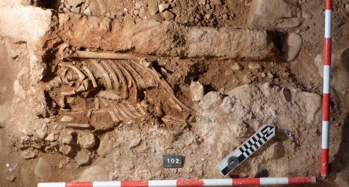 La Diputació participa en el estudi genètic més gran sobre l'antiguitat que s'ha realitzat sobre la Península Ibèrica