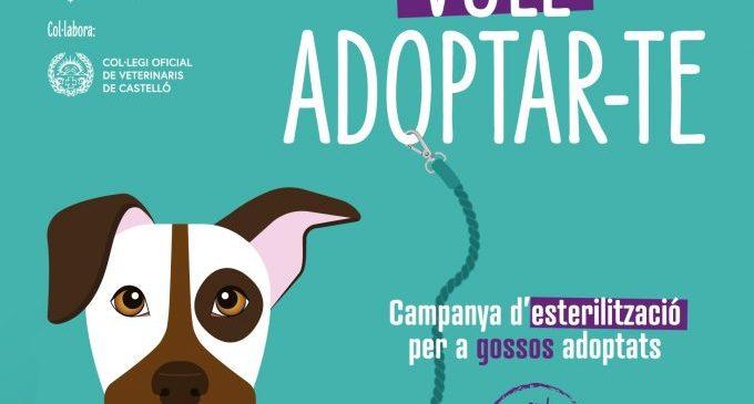 Castelló subvenciona l'esterilització de gossos adoptats en el servei municipal de recollida