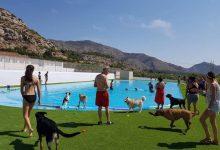 La segona piscina per a gossos d'Europa està en Castelló