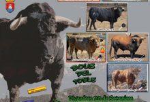Almenara presenta un programa taurí per a les festes patronals que inclou sis bous 'cerrils'