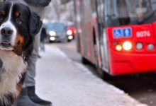 Castelló activa una campanya de conscienciació en parcs canins