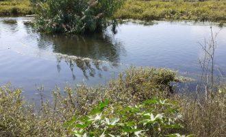 Localitzada a Vila-real una xarxa il·legal de grans dimensions instal·lada a la gola sud