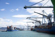 La Conselleria d'Agricultura denuncia la detecció d'una partida de material vegetal procedent dels EUA infectat de 'Xylella' en el port de Castelló