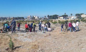 Prop de 500 escolars reforestaran la zona de l'Arenal de Borriana plantant arbres