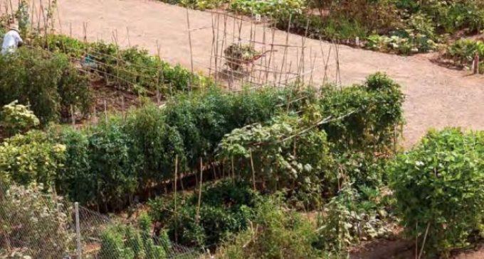Castelló reobrirà aquest dimecres els horts urbans seguint les normes de prevenció de Sanitat