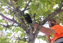 Infraestructura Verda inicia el control biològic de plagues als parcs i jardins de Castelló
