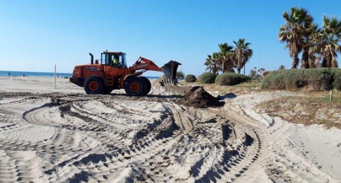 Castelló impulsa la neteja de platges en una gestió més ecològica reutilitzant les algues per regenerar les dunes del Parc Litoral