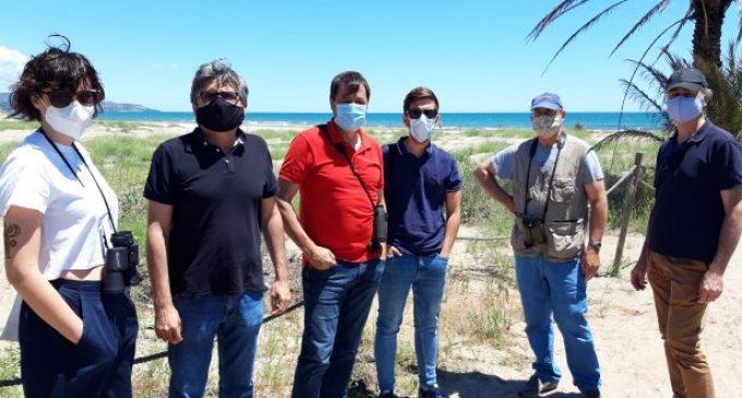 Transició Ecològica treballa amb Gecen i el Grup Au d'Ornitologia per millorar l'hàbitat del corriol camanegre