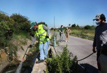 Castelló cobreix més de 20 hectàrees de la zona costanera amb tractaments antimosquits extraordinaris