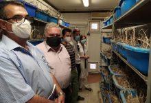 Navarro visita el insectario del IVIA para impulsar tratamientos biológicos que protejan el término de Castelló del cotonet