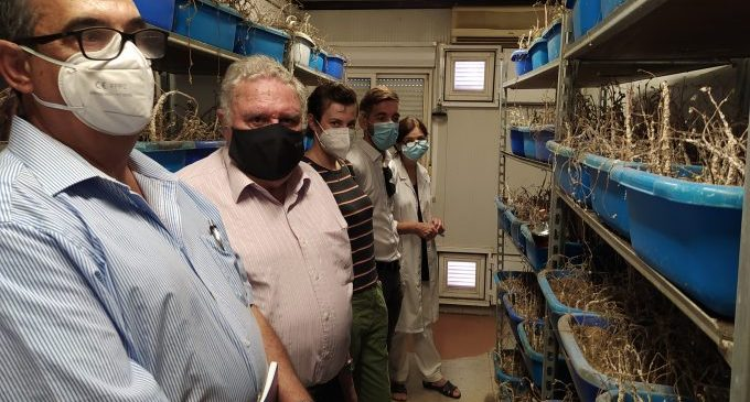 Navarro visita l'insectari de l'IVIA per a impulsar tractaments biològics que protegisquen el terme de Castelló del cotonet