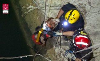 Rescatado un perro en la presa del embalse de l'Alcora