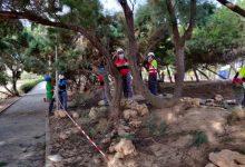 """Els alumnes del taller """"Et Formem"""" de Vinaròs adeqüen el bosc mediterrani del passeig de Fora del Forat"""