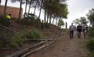 La Diputación limpia por primera vez en 40 años las zonas forestales de Penyeta Roja