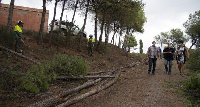 La Diputació neteja per primera vegada en 40 anys les zones forestals de Penyeta Roja