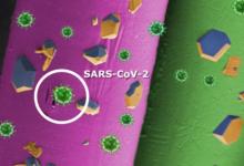 Una recerca de l'UJI demostra per primera vegada la inhibició del SARS-CoV-2
