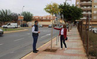 L'Ajuntament de l'Alcora planta nous arbres i retira soques