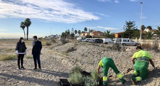 Iberdrola protegeix les dunes d'Almassora amb més de 2.000 plantes autòctones