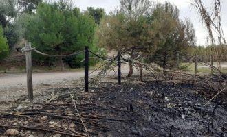 Los últimos incendios en el Paisaje Protegido de la Desembocadura del Mijares queman pinos, cañaverales y una parte del histórico molino del Terraet