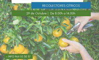 Borriana acollirà la primera jornada formativa de recol·lecció de cítrics de la província