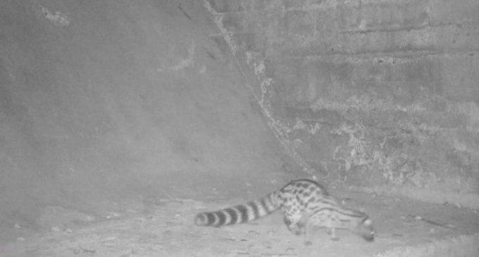 El foto parament continua donant excel·lents resultats d'imatges de fauna salvatge al Paisatge Protegit de la Desembocadura del riu Millars a Vila-real