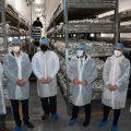 Manantial Vilamico obri a Vila-real un centre pioner d'economia social per a la producció de xampinyó