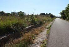 Castelló adjudica els serveis de desratització per a solars i instal·lacions municipals
