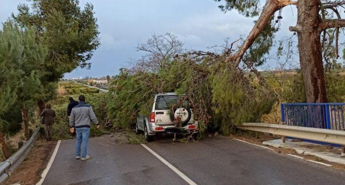 El vent deixa atrapada en el seu cotxe a una conductora per la caiguda d'un arbre a Nules
