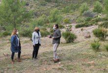 Benicàssim actúa en las urbanizaciones de montaña para la prevención de incendios forestales