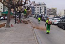 Vinaròs realitza tasques de manteniment de l'arbrat de l'avinguda de Jaume I
