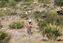 El Consell aprova el Pla Local de prevenció d'Incendis Forestals de Benicàssim