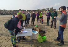 Castelló pone en valor la riqueza natural de sus playas y mejora el ecosistema del chorlitejo en una jornada de voluntariado ambiental