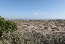 Castelló i SEO Bird Life organitzen una doble jornada de voluntariat  per a millorar l'hàbitat del corriol camanegre