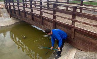 Peníscola avança en el control de plagues de mosquits en l'entorn urbà i periurbà