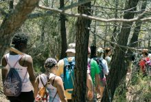 Castelló celebrarà el Dia del Medi Ambient amb una replantació d'espècies