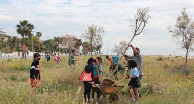 Escolares participan en la plantación de un bosque litoral de tarajes en la Malva-rosa de Burriana