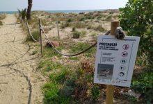 Castelló promou bones pràctiques a les platges per a protegir la microreserva del Serradal i el corriol camanegre