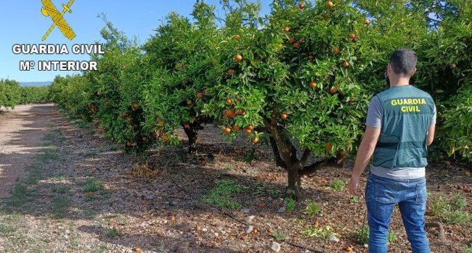 Detingudes dues persones per sostraure 35.000 kg de taronges a Vinaròs, Sant Jordi i Traiguera
