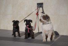 Onda inicia la campanya del cens d'animals de companyia i consciència a la població sobre la nova ordenança