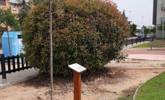 Nules se adhiere a la iniciativa medioambiental #Unárbolporeuropa y planta dos árboles para apoyar la sostenibilidad