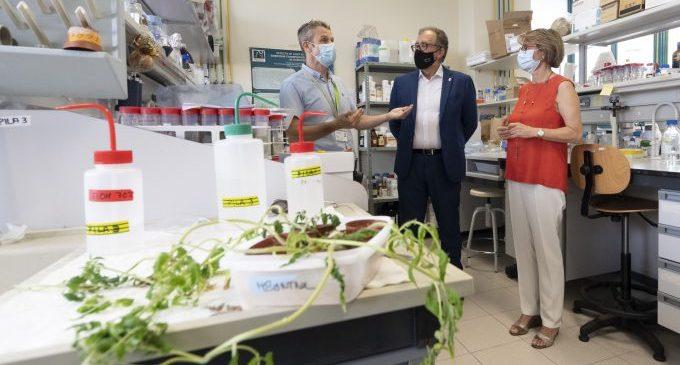 La Diputació i l'UJI investigaran com combatre plagues i malalties en cultius mediterranis amb microorganismes beneficiosos