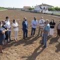 La Diputación amplía la subvención a la Denominación de Origen Protegida Alcachofa de Benicarló hasta los 57.000 euros para sustituir las plantaciones enfermas