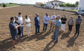 La Diputació amplia la subvenció a la Denominació d'Origen Protegida Carxofa de Benicarló fins als 57.000 euros per a substituir les plantacions malaltes