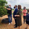 Benicarló demanarà ajudes per als agricultors afectats per la pedregada