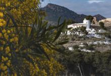 """""""Castelló en verd"""", un concurs de fotografia que pretén donar visibilitat a les activitats agroalimentàries de Castelló"""