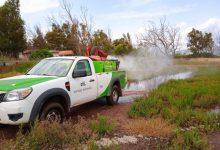 Benicàssim reforça el Pla Especial per al control del mosquit després de les passades pluges