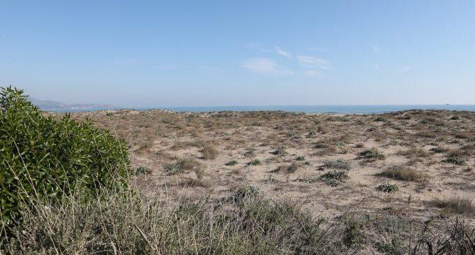 Castelló celebrarà el Dia Mundial Marítim amb una jornada de neteja en el Serradal i una solta de tortuga