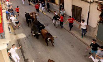 """Los Fuente Ymbro abarrotan la Vila de Almassora en el regreso de los """"bous al carrer"""" a la Comunitat Valenciana"""