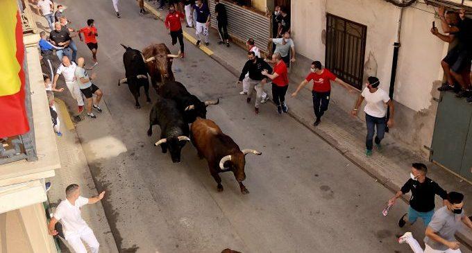 Els Fuente Ymbro abarroten la Vila d'Almassora en el retorn dels bous al carrer a la Comunitat Valenciana