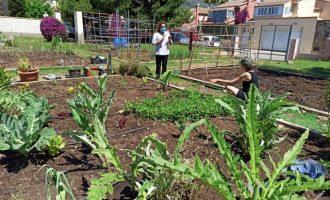 Benicàssim pone a disposición de sus vecinos 20 tablas de cultivo en el huerto urbano municipal